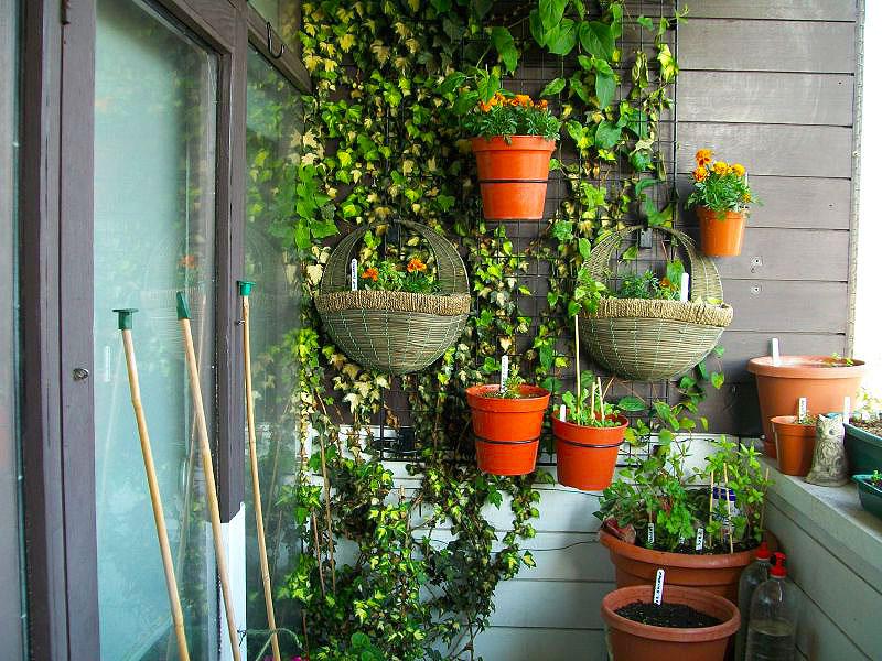 Как на балконе сделать великолепный летний сад
